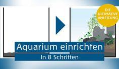 Aquarium einrichten Anleitung Teaser