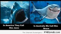 Welcome to Straya  An Oi Oi Oi collection of funnies  PMSLweb