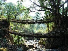 Bridges made from its natural environment
