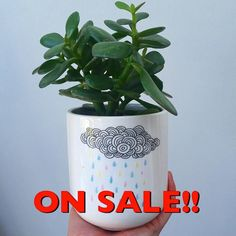 As it's well and truly Autumn we've put 'The Summer' on #sale (plus loads of other pots and plants!)