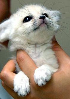 But im a fennec fox arnt i cute :)