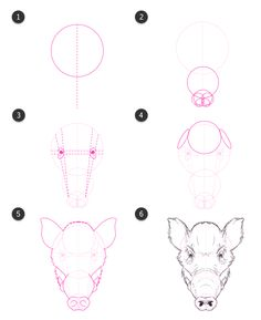 How to Draw Animals: Domestic Pigs, Wild Boars, and Warthogs - Tuts+ Design & Illustration Tutorial