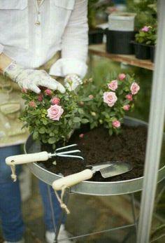 Pink Garden, Dream Garden, Summer Garden, Beautiful Home Gardens, House Beautiful, Grandmas Garden, Rose Cottage, Garden Cottage, Gardening Gloves