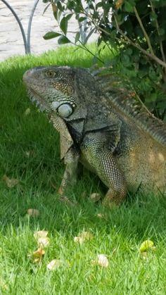 En el Parque de la Iguanas,  Guayaquil - Ecuador