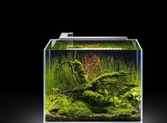 An incredible nano tank, featuring and testing the Flexi-M. Incredible results with this little light fixture, isn't it? See more pictures on this post here. Nano Aquarium, Nature Aquarium, Planted Aquarium, Aquarium Ideas, Nano Cube, Betta Tank, Nano Tank, Paludarium, Tank Design