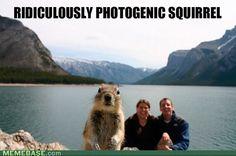 internet memes - Photogenic Squirrel