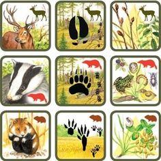 Pexetrio Plus: Savci 4 Year Old Activities, Abc Activities, Forest Animals, Woodland Animals, File Folder Activities, Theme Nature, Montessori Practical Life, Animal Tracks, Outdoor Education