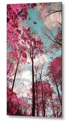 Paisaje de ensueño árboles azules rosa Foto por MayaRedPhotography