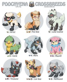 Pokemon Adoption Center – Poocheyena Crossbreeds An Adoption Center where you can adopt pokemon! The post Pokemon Adoption Center – Poocheyena Crossbreeds appeared first on Poke Ball. Pokemon Fusion Art, Solgaleo Pokemon, Pokemon Breeds, Gijinka Pokemon, Play Pokemon, Pokemon Memes, Pikachu, Pokemon Fan Art, How To Breed Pokemon