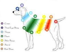 Reiki|Canine Massage Edina MN| Dog Massage Edina MN|Equine Massage ...