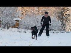 Dobermann hiihto - YouTube
