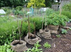 Plant potatoes in burlap sacks, add successive layers of dirt and gradually pull the sack up as the plants grow.