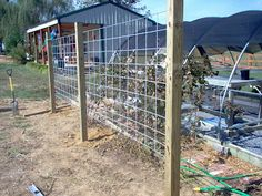 This weekend my husband and I built a new trellis for our blackberry canes. Our original trellis was made from 2 landscape timbers with 8 f. Rasberry Trellis, Blackberry Trellis, Grape Vine Trellis, Grape Vines, Fruit Garden, Edible Garden, Herbs Garden, Gardening Vegetables, Farm Gardens