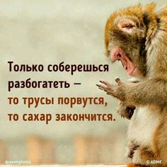 Cum strângi un ban Russian Humor, Russian Quotes, Humor In Advertising, Fanny Photos, Happy Birthday Video, Funny Expressions, Funny Phrases, Cute Cartoon Wallpapers, Self Motivation