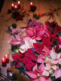 2014 ChristmasStar Classic06