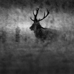 Årets naturfotograf är utsedd - Fotosidan