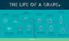THE LIFE OF A GRAPE [INFOGRAPHIC] #wine #winery #grape #wineeducation