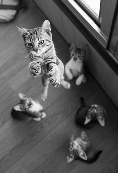 Little cute kitty jump like a rocket.... to see more click on picture