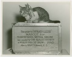 Strato Lizzie (TWA) - World's Fair cat show, 1940