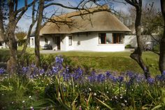 Thatchers rest cottage bluebells in spring - the cottages Ireland - bettystown - photo by Gerard Seery cottage ireland small house home tiny cabin Cottages By The Sea, Beach Cottages, Small Boutique Hotels, Luxury Holiday Cottages, Loire Valley, Garden Cottage, Luxury Holidays, Cottages Ireland, Ideal Home