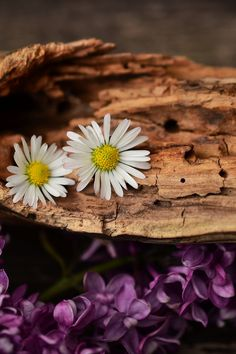 Free download of this photo: https://www.pexels.com/photo/white-petaled-flower-on-brown-trunks-158726/ #flowers #summer #texture