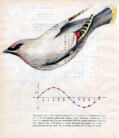 bird sketchbook