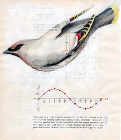 ... cedar waxwing : sine curve ...(diagram of its song)