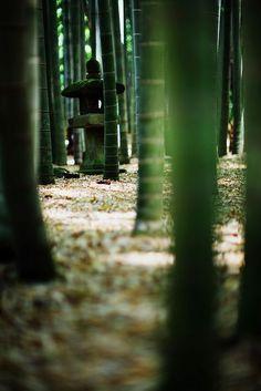 Inspirational Japanese bamboo grove #bamboo #inspirational #japan