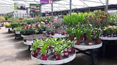 Summer colour in Horkans Galway!