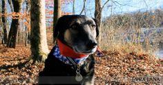 Cooles blau-weiß kariertes Hunde-Sicherheitstuch