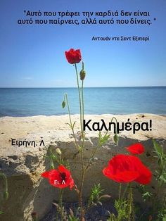 Good Morning, Beach, Water, Plants, Outdoor, Greek, Decor, Motorbikes, Buen Dia