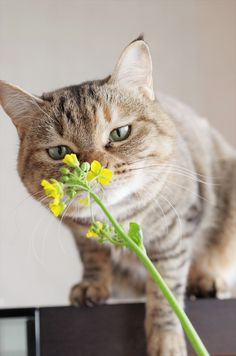 **PETAL PUSHERS: Cats love flowers and plants, which can be worrisome because many of them, especially holiday plants like mistletoe and calla lillies are toxic to cats. Some lovely flowers are perfectly safe, but check the Internet or the library for a list of plants to avoid.l