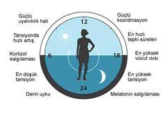Vücut Saati'ni Araştıran 3 Amerikalı Bilim İnsanına Nobel Tıp Ödülü - http://www.aylakkarga.com/vucut-saatini-arastiran-3-amerikali-bilim-insanina-nobel-tip-odulu/