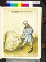 Amb. 317.2° Folio 36 recto