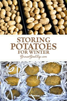 Storing Potatoes for Winter: Take advantage of the cool areas in your home such as an unheated garage basement or closets to store potatoes. Here are five easy steps to store potatoes all winter. Storing Potatoes, How To Store Potatoes, Planting Potatoes, Fruit And Veg, Fruits And Veggies, Winter Vegetables, Potato Storage, Storing Fruit, Vegetable Storage