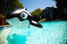 SUMMER!! :D <3 #summer #meganandliz #beach #pool #waves #photography #whale