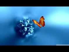 Abraham Hicks ~ Listen To This Before Seeking Manifestations! NEW