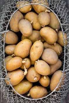 Potatoes by Renáta Dobránska   Stocksy United