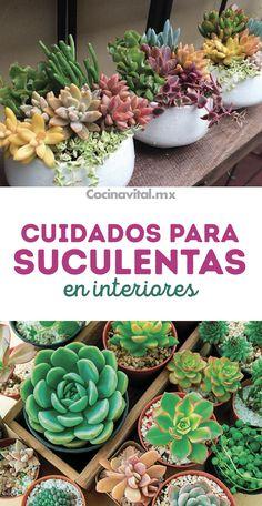 How To Water Succulents, Buy Succulents, Succulents In Containers, Eco Garden, Garden Pots, Vegetable Garden, Suculentas Interior, Succulent Care, Plants Vs Zombies