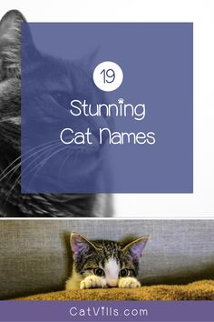 Looking for a clever name for your new cuddly kitty? Check out 19 totally perfect male cat names that we think you'll love! Baby Kittens, Cute Cats And Kittens, Cool Cats, Funny Cat Memes, Funny Cats, Female Names, Outdoor Cats, Cat Names, Clever