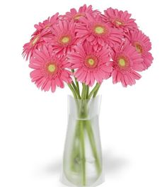 Deliver this one Beautiful Pink Gerberas Bouquet to your Best friend on her Birthday. Send it to sweeten a best friend's birthday surprise. Gerberas means innocence and purity, also a classic symbol of beauty.