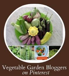 Thinking about a fall vegetable garden? These are among the best veggie garden people on the web--all on one board.     (Main image of squash credit: @Teresa O'Connor of SeasonalWisdom.com)