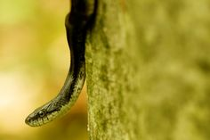 found this guy climbing up a trunk of a tree Tuckahoe State Park, MD 5-8-15 Photo RHR