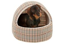 English Style, Plastic Laundry Basket, Chihuahua, Wicker, Dog Stuff, Decor, Dogs, Dog Accessories, Warm Browns