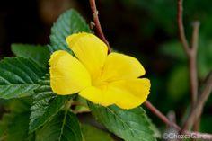 Very bright flower