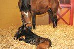 Cheap 'n' Easy' Method for Evaluating Stallion Sperm Described (AAEP 2012)