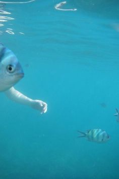 The perfectly timed one-armed fish picture: | The 45 Best Perfectly Timed Photos Of 2013