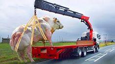 Intelligent Technology Smart Cow Transportation Mega Machine Biggest Carriers Trucks Oversize Load