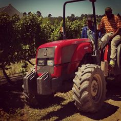 Last of the summer wine. Vintage Country, Farm Animals, Wines, Harvest, Monster Trucks, Bubbles, Countryside, Summer, Summer Time