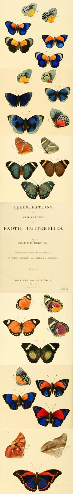 Click to read this #butterfly book from 1856. These butterflies are great inspiration for woodworking, craft, art and many other DIY projects!